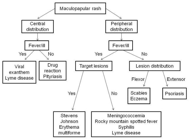 cutaneous drug reaction